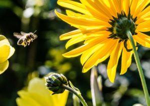 Bienenkostüm